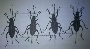 A rovarok tipikus futómozgása